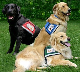 service_dog_training